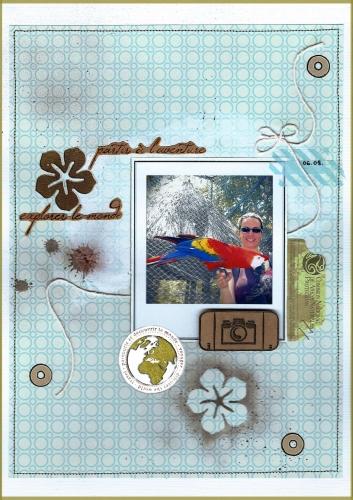 perroquet.jpg